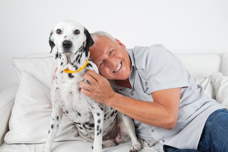 Older man holding a dalmatian.